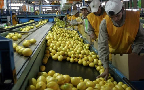 <h5><strong>EMPRESAS</strong></h5>Productora de limones recibió financiamiento por 100 millones de dólares